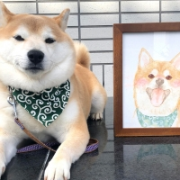 柴犬の可愛すぎる笑顔を家に飾ろう!〜愛らしい笑顔で日々に癒しと幸せを〜